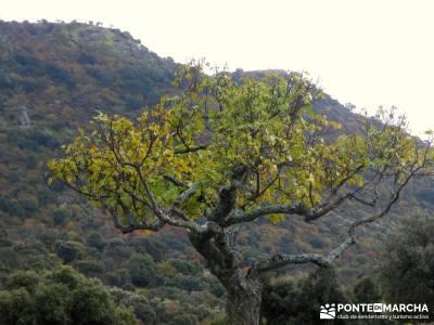 Senda Viriato; Sierra San Vicente; la pinilla fin de año senderismo barcelona viaje fin año